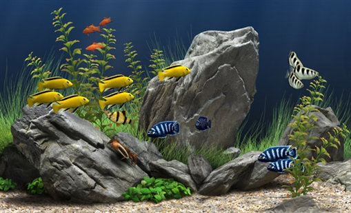 déco aquarium eau douce