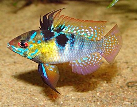 les poissons d aquarium
